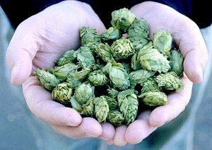 Hops in skin care